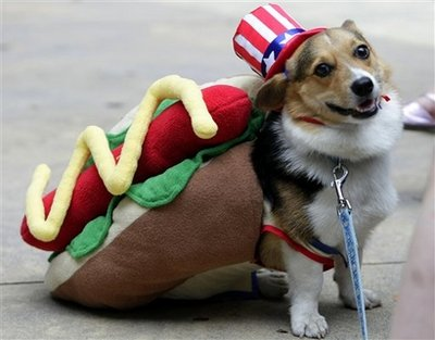 Hot Corgi Dog